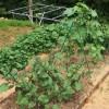 ゼロから始める炭素循環農法(笑)