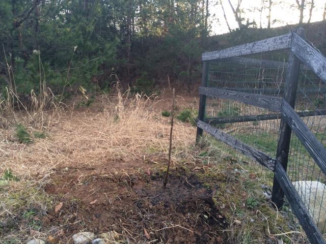 柿の木を植えた。