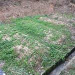 土壌微生物日和 犬たちと炭素循環農法と