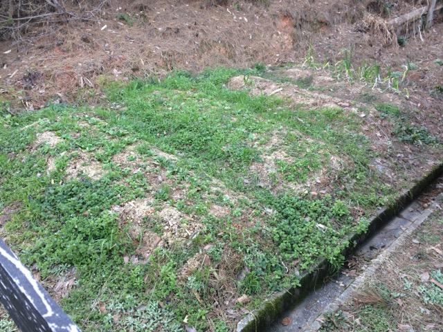 昨年ジャガイモを植えていた畑