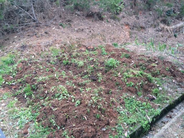 雑草も一緒に漉き込みながら耕す