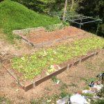 夏野菜の植え付け準備(炭素循環農法)