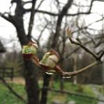 春の雨とハナミズキ