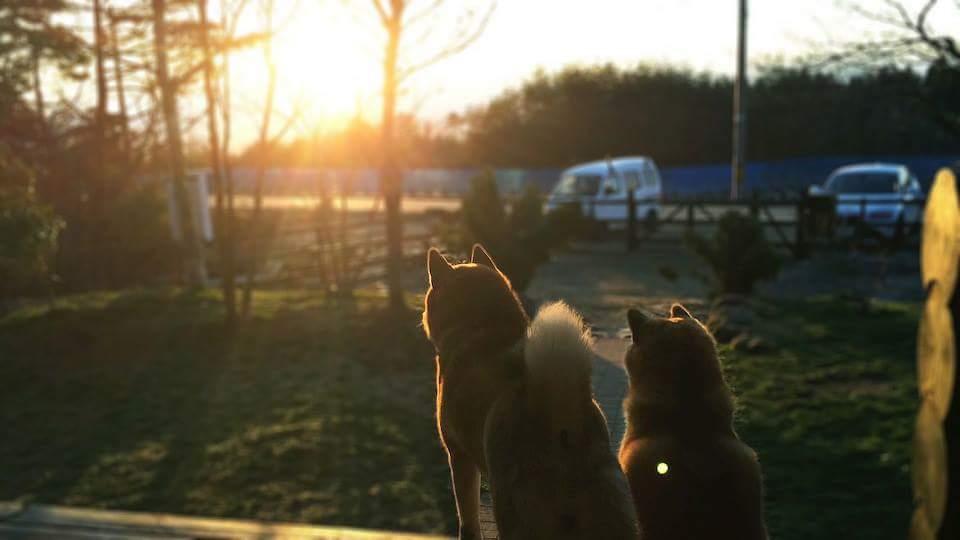 日の出を見る犬