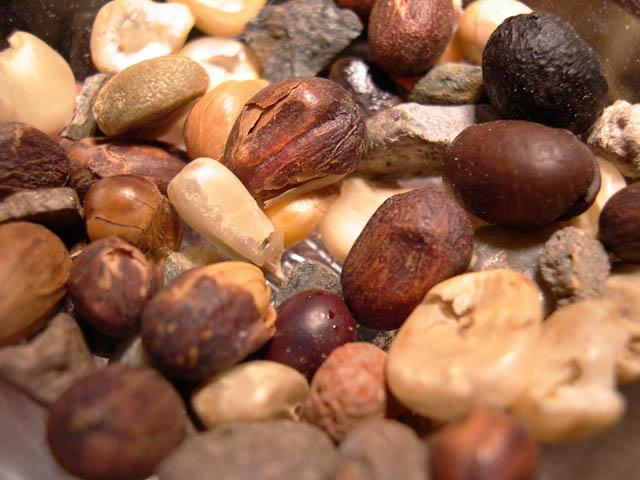 コーヒー豆の不純物
