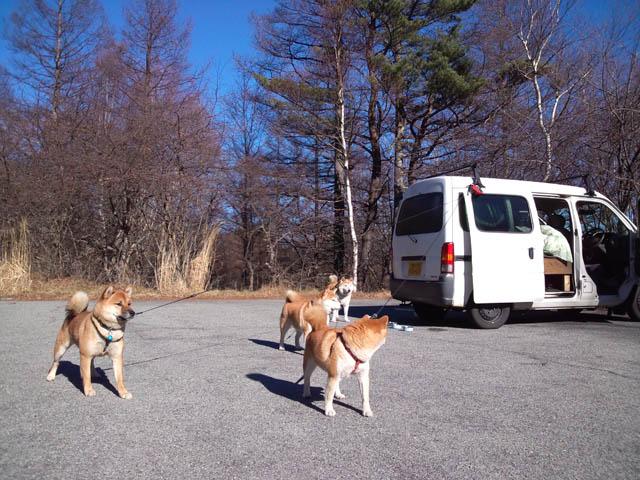犬たちを連れて車中泊で八ヶ岳へ行った。